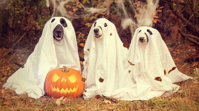 Halloween – dnes už nejen anglosaský svátek