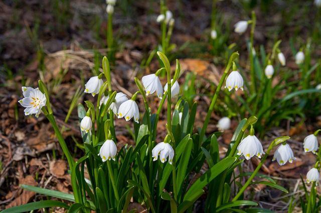 Přivítejte s námi jaro