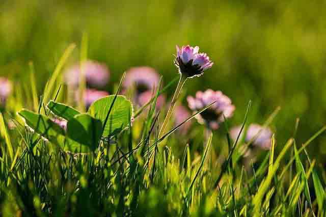 Nechte svou zahradu zazářit