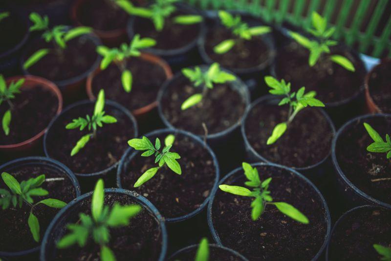6 zásad pěstování zeleniny v zahradním skleníku