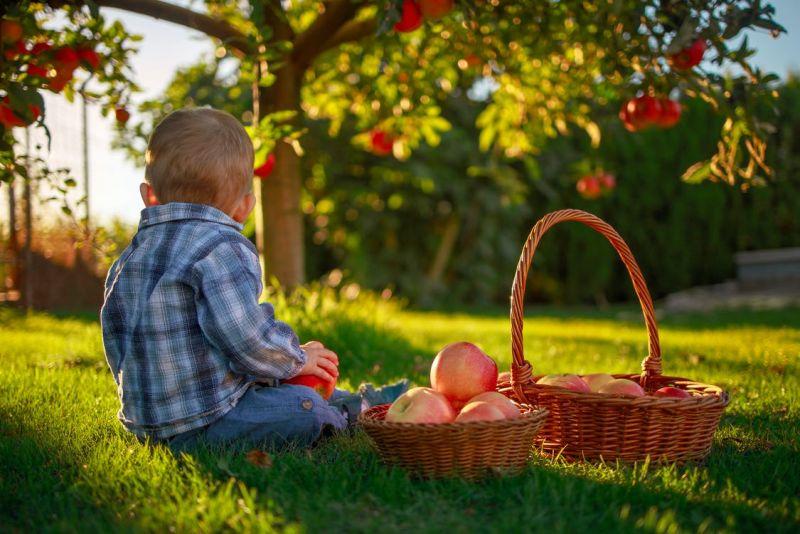 Zavařování úrody ze zahrádky – bio pochoutky nejen pro miminka a děti