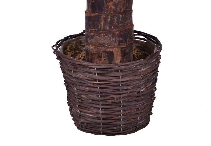 Umělá květina - Kokosová palma 170 cm