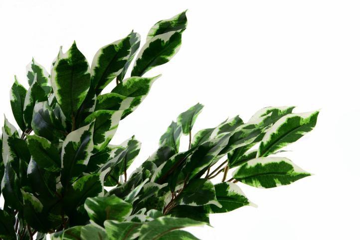 Umělá rostlina - fíkus - 150 cm