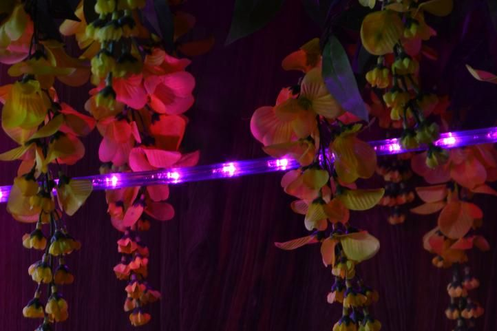 LED světelný kabel - 240 diod, 10 m, růžový