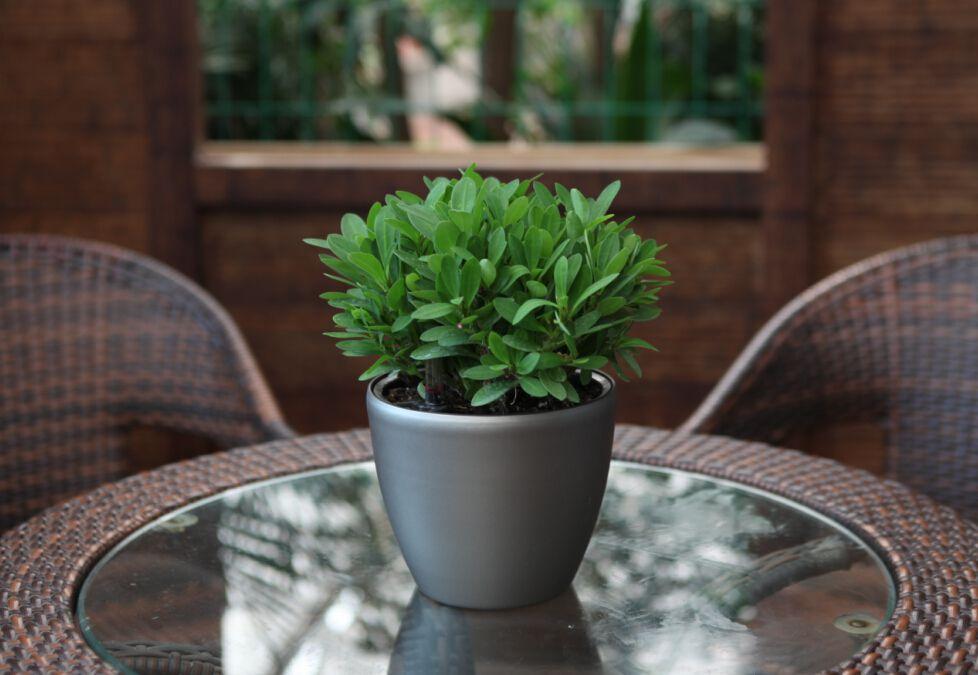 Samozavlažovací květináč G21 Ring mini černý 15cm