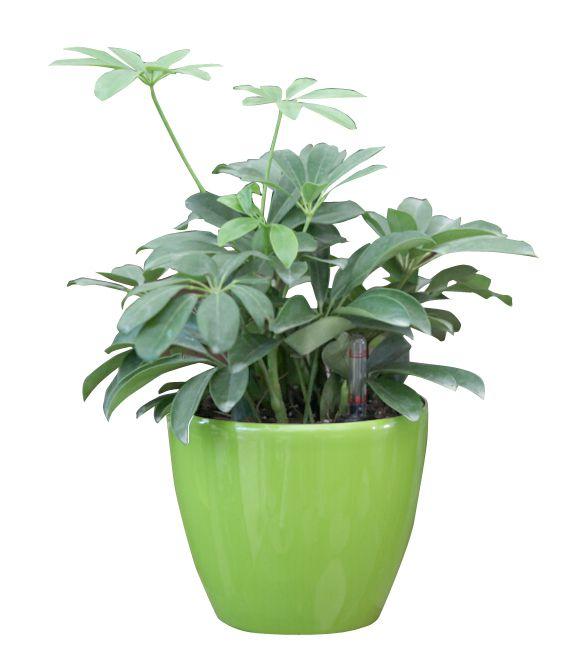 Samozavlažovací květináč G21 Ring zelený 17.5cm
