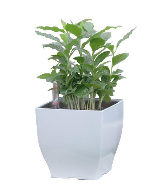 G21 Cube mini Samozavlažovací květináč bílý 13.5cm