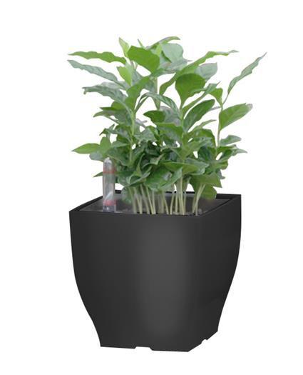 Samozavlažovací květináč G21 Cube mini černý 13.5cm