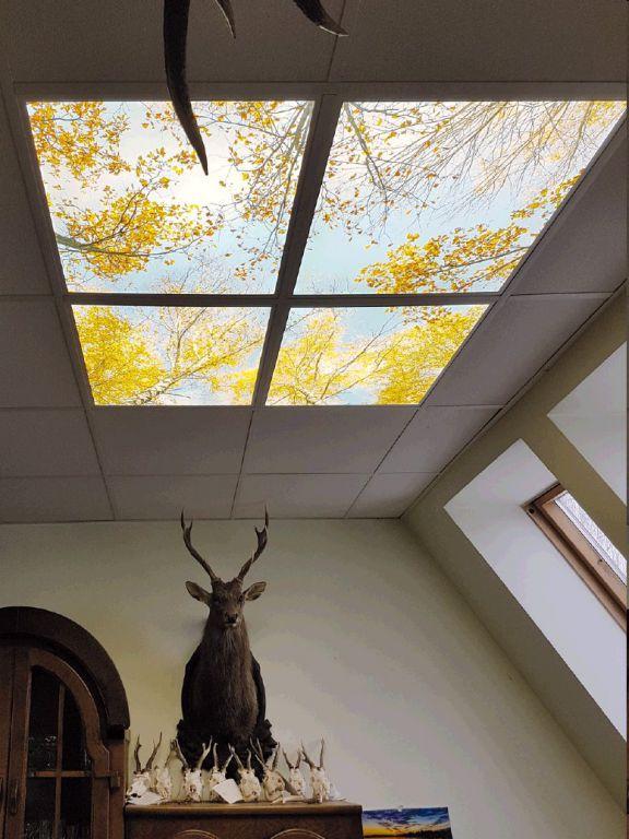Sada ORT 4 ks LED panelů dekorativní 60 x 60 cm 48W, 3300lm denní bílá - motiv bříza