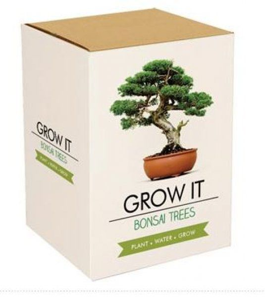 Grow it – Bonsai