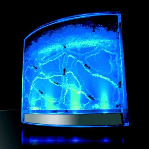OEM 44881 Mravenčí akvárium s podsvícením