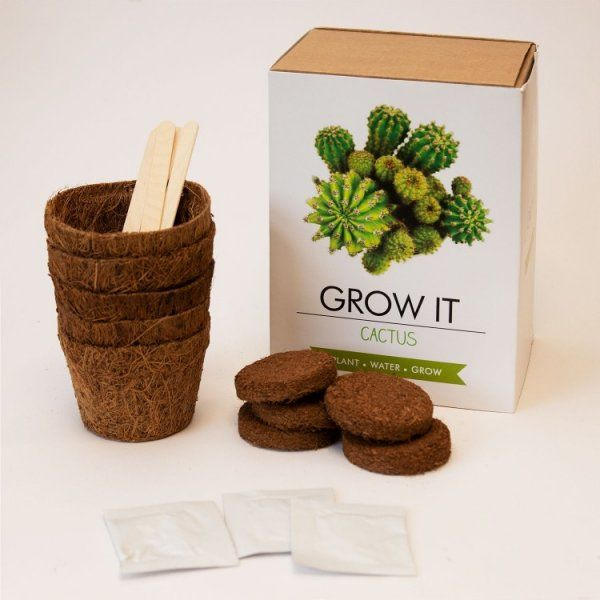 Grow it – Kaktus