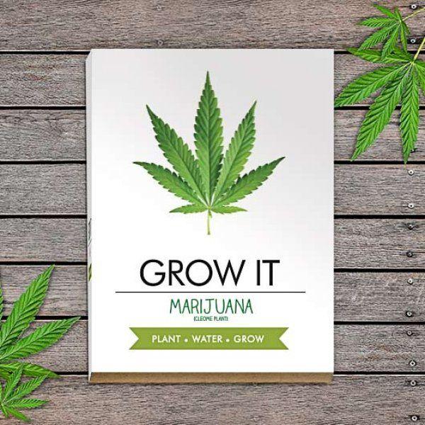 Grow it – vypěstuj si marihuanu