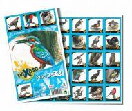 Pexeso 32 Ptáci společenská hra