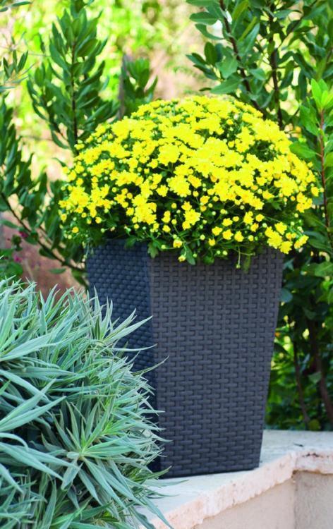 Květináč ratanového vzhledu plastový – S