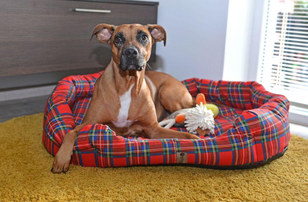Pelíšek pro psa Scotty - 90 cm