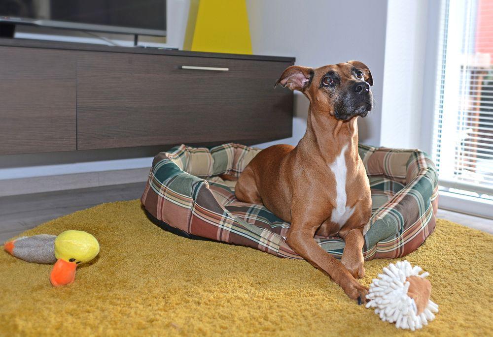 Pelíšek pro psa Hubert – 90 cm