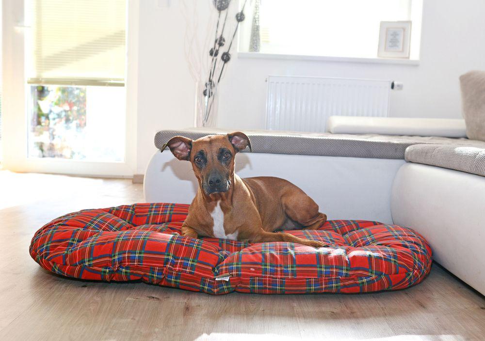 Pelíšek pro psa Scotty – 120 cm